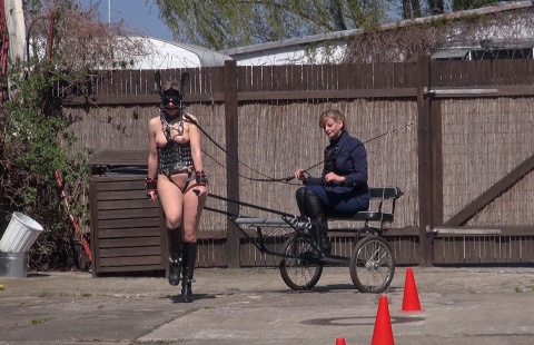sulky ride with a ponygirl